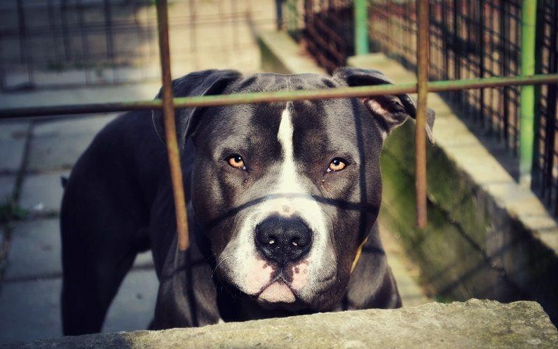 Perros peligrosos ¿Realmente la especie canina es peligrosa?